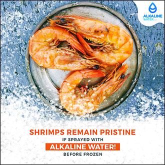 Shrimp Remains Pristine